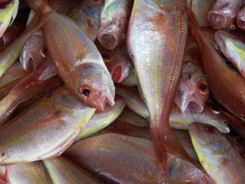 Pescetarier – Vegetarier die Fisch essen!?