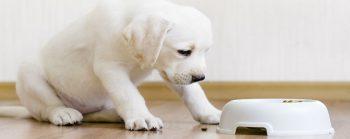Fleischlos gluecklich Hunde als Vegetarier
