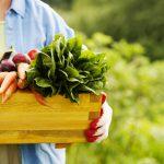 Frau hät eine Kiste mit Gemüse